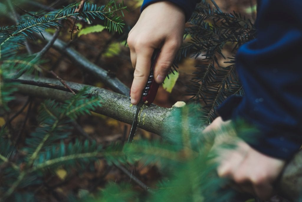 One hand holds spruce branch, another cuts it with saw blade on survival knife - one of the skills to survive in the wilderness