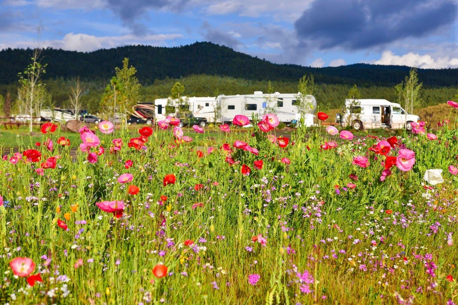 Planning 'Last of Summer' escape? Think 'Angel Fire Food and Wine Roundup'