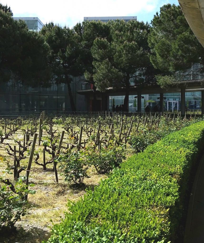 One of Bordeaux Instagram Spots at vineyard at the Bordeaux-Mérignac Airport
