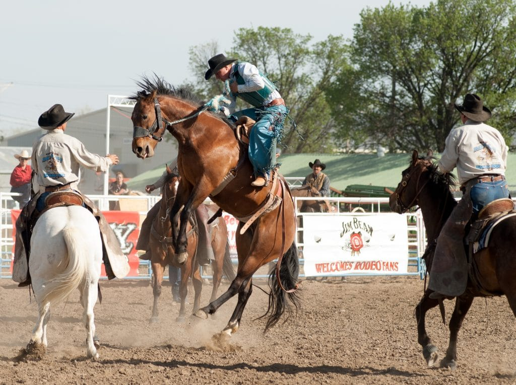 horse bucking high in the air with cowboy contestant riding