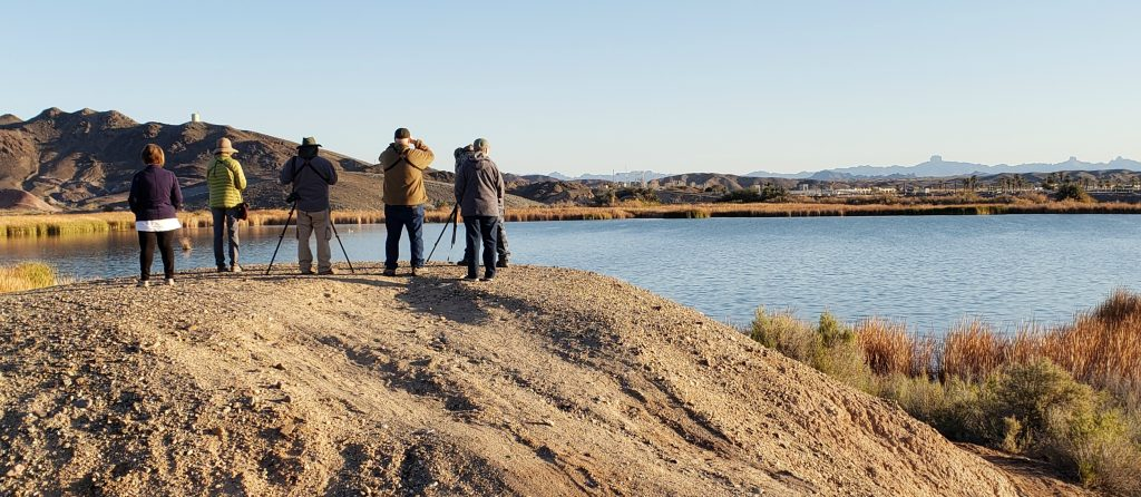 Birders stand on top of a hill with back to camera looking at water below with binoculars and mounted scope.