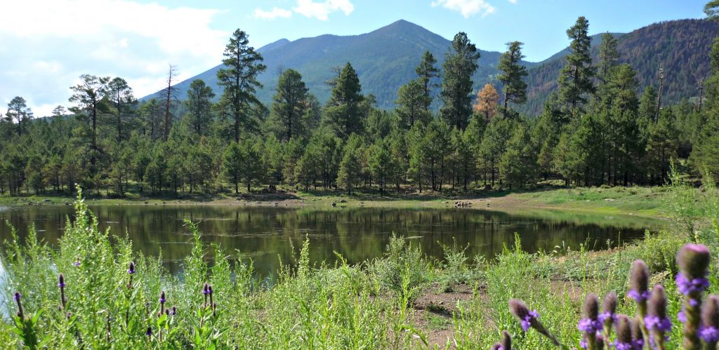 Purple flowers frame calm pond with ponderosa pine trees and blue mountain rising behind