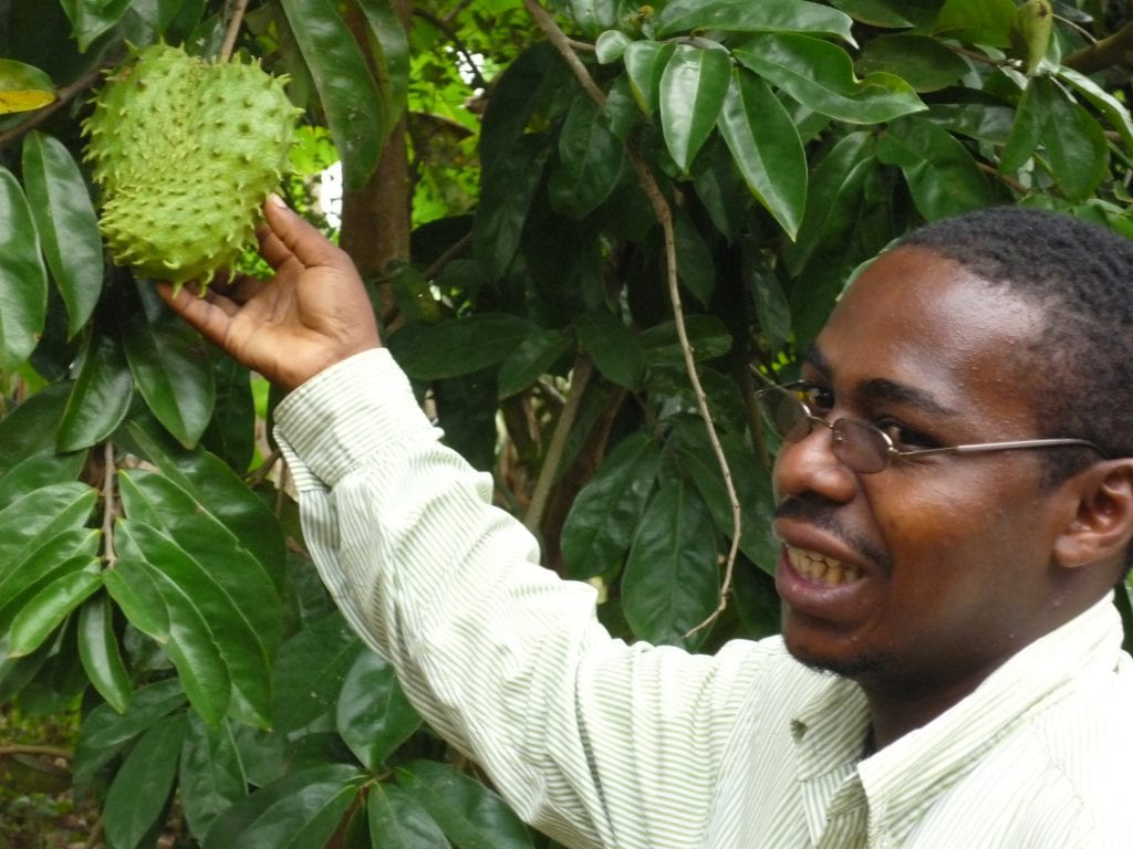Young man in long-sleeved white shirt who is our guide holds green fruit still on tree