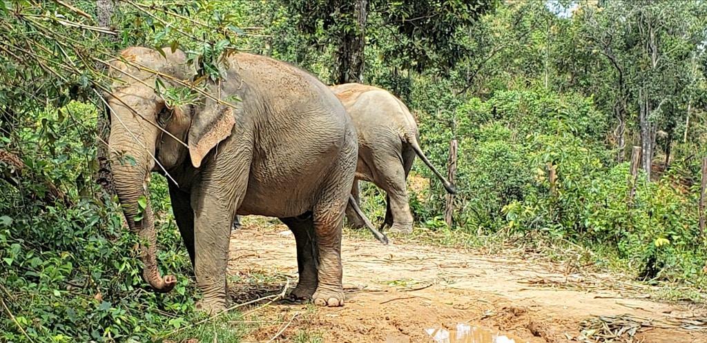 How to Celebrate World Elephant Day and National Thai Elephant Day