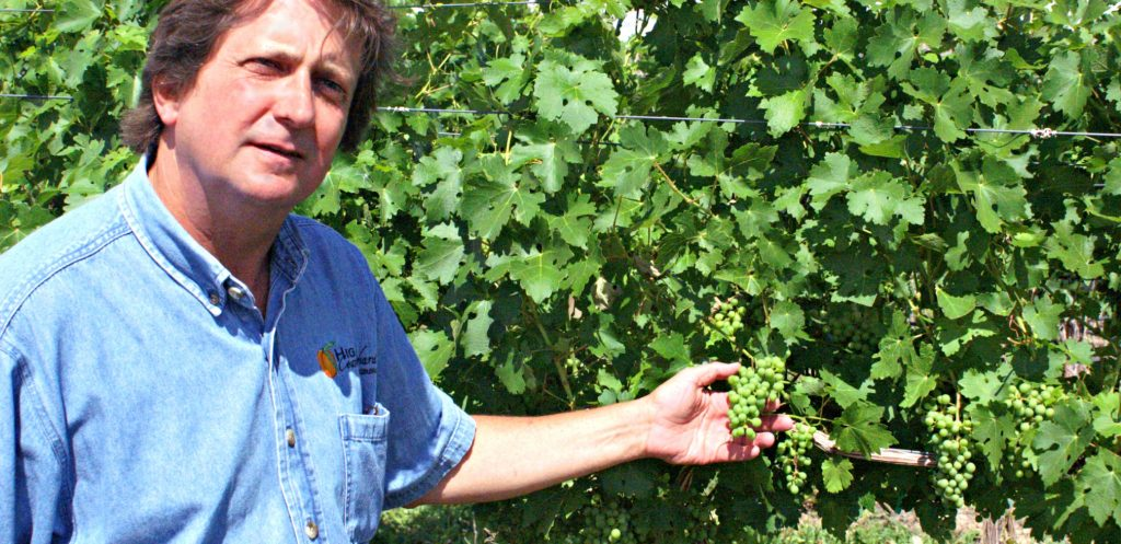 Man stands next to tall vines holding bunch of green grapes during my Colorado wine tour