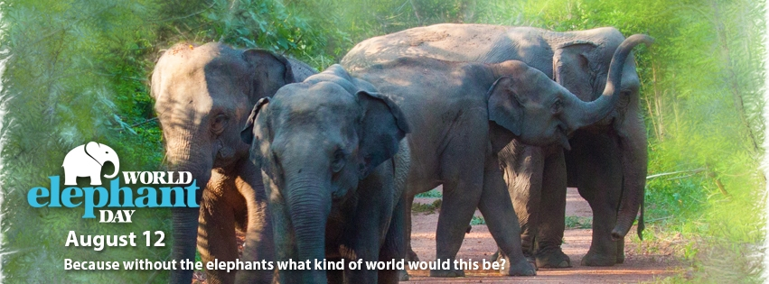 """Poster of elephant with words """"World elephant day' - Because without elephants, what kind of world would this be?"""