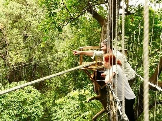 a young couple looks off camera into the forest while standing on a roped walkway during a Lake Manyara National park safari and canopy tree walk