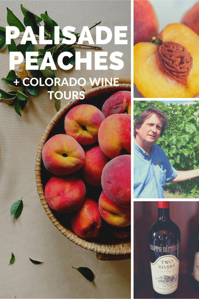 pinterest image with photo of peaches, wie bottle and man next to grape vines during Colorado wine tour