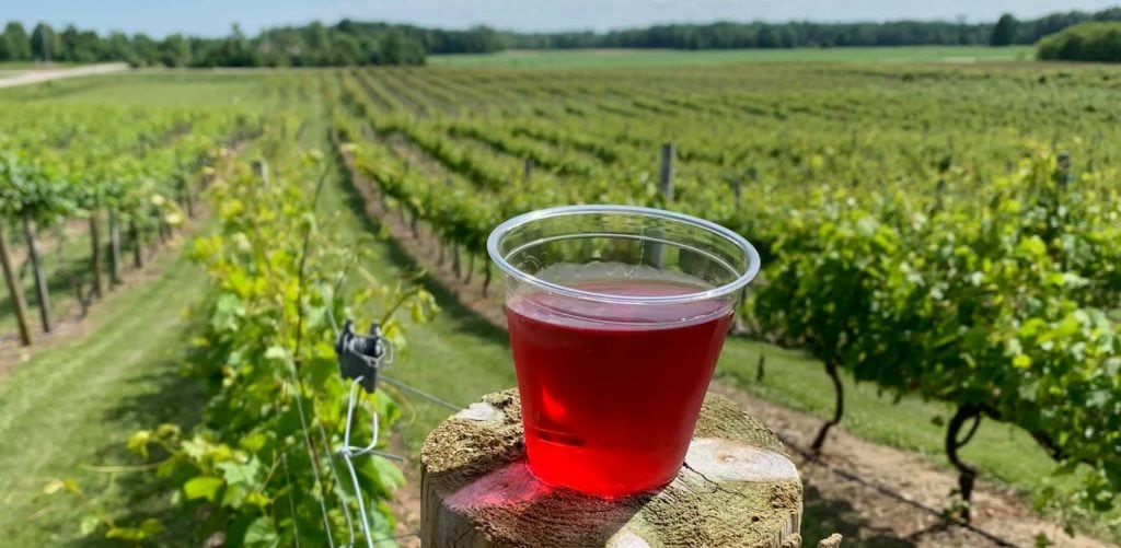 plastic glass of red wine sits on fence post that holds up wine grape vines. Vineyards slope down behind on the Wisc Way pilgrimage route