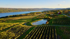 4 Best Finger Lakes Wineries You Need to Visit