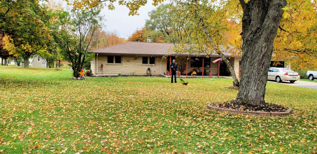 small by rakes leaves under tree while his father rakes leaves near the center of the lawn at a mid-century-modern-style home