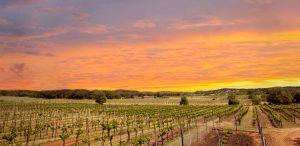 Grape Growing in Texas is Key to Best Texas Wines