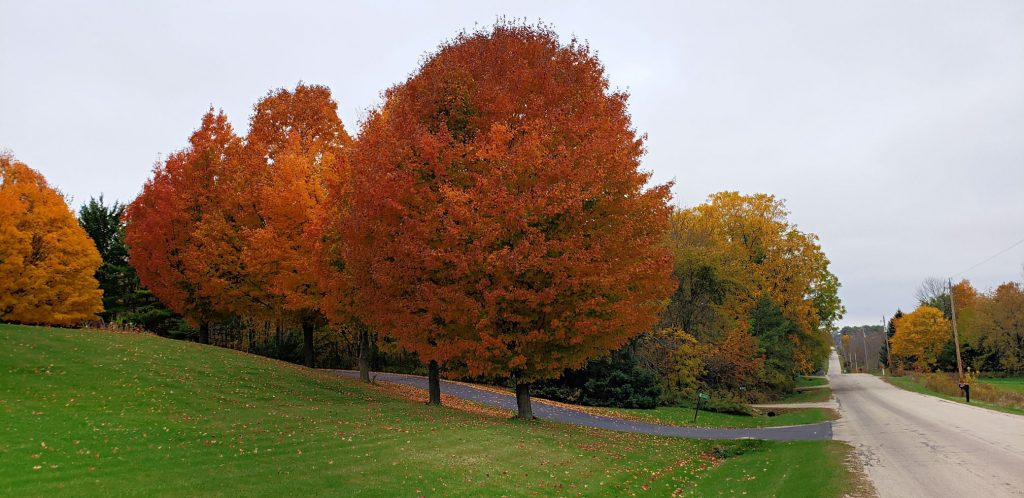 bright red maple trees line road that disappears over steep hills in the distance on the Wi Way
