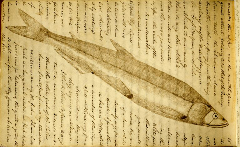 yellowed paper with sepia tone handwriting around a pen drawing of a fish - artful and scientific